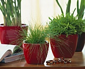 Rushes and potted bamboo in red cache-pots