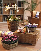 Room with cane furniture & house plants in wicker cache-pots