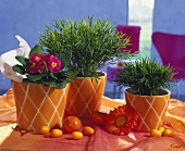 Potted bamboo & primula in orange cache-pots & wooden eggs