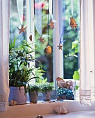 Umbrella plant & mind-your-own-business on window-sill
