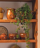 Kitchen shelf with jugs and bowls and a potted ivy