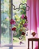 Flower mobile with Cosmea on a branch of corkscrew hazel