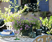 Flowering Swan River daisies on a garden table