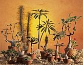 Still life: sunrise in desert with succulents
