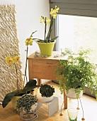 Blumenecke mit gelben Phalaenopsis und Frauenhaarfarn