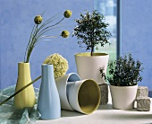 Myrtle plants, Allium flower and seed capsules for decoration