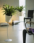 Green houseplants in stemmed planters in a cool, modern setting