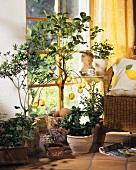 Mediterranean flowers: Hibiscus, potato bush, citrus, gardenia