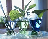Various leaves in glasses of coloured water