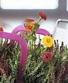 Erica calluna with zinnias in glass tubes