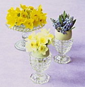 Narcissi and hyacinths in eggshells and eggcups