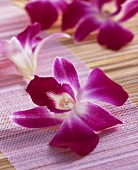 Edible orchids (Karma)