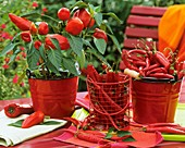 Peppers and chili peppers in red enamel buckets