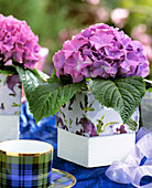 Hydrangea in pot with pansies (serviette decoupage)
