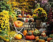Autumn still life with pumpkins and chrysanthemums