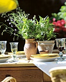 Herb flowers in clay pots on buffet table