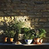 Herbs de Provence in Pots