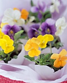 Halved egg shells with pansies as Easter decoration