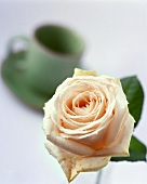 Rose and coffee cup