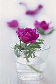 Flower in glass of water