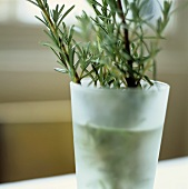Sprigs of rosemary in a vase