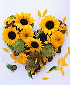 Heart of sunflowers and chestnuts