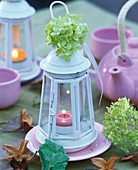 Hydrangea on white lantern containing tea light