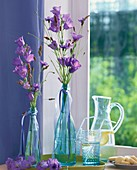 Campanulas, cornflowers and grasses in blue bottles