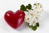 Red heart and may blossom (hawthorn)