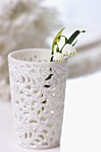 Spring snowflake in white beaker