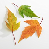 Drei einzelne Herbstblätter