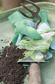 Packet of organic spinach seeds, garden tool, gloves, compost