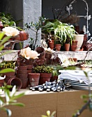 Various plants in pots with cutlery and a pile of plates