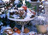 Wire basket with decorations in snow