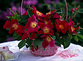 Rose 'Scharlachglut' in rosa Körbchen