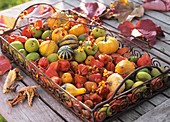 Metal tray with autumn decoration of ornamental gourds