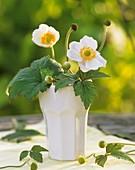 Japanese anemones 'Queen Charlotte'