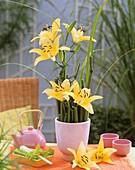 Arrangement of yellow lilies, variety 'Lemon Pixie'