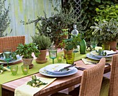 Laid table with herb pots as table decorations