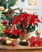 Poinsettias with Advent decorations