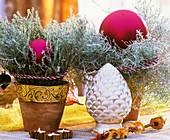 Curry plant in pots with Christmas decorations
