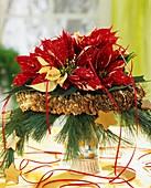Weihnachtsstern 'Sonora White Glitter' mit Pinienzweigen
