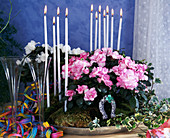 Arrangement of azaleas & ivy for New Year with decorations