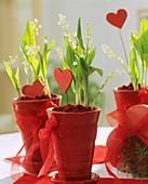 Maiglöckchen in roten Töpfchen mit Herzdeko