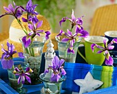 Irises with maritime decorations