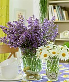 Catmint and marguerites in glass vases