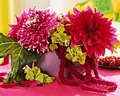 Arrangement of Dahlias ('Garden Wonder') and Bells of Ireland