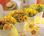 Pots of marigolds and Tagetes