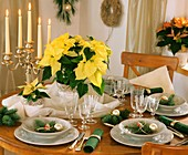 Festive table with poinsettia