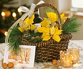 Gift basket with poinsettia and white pine